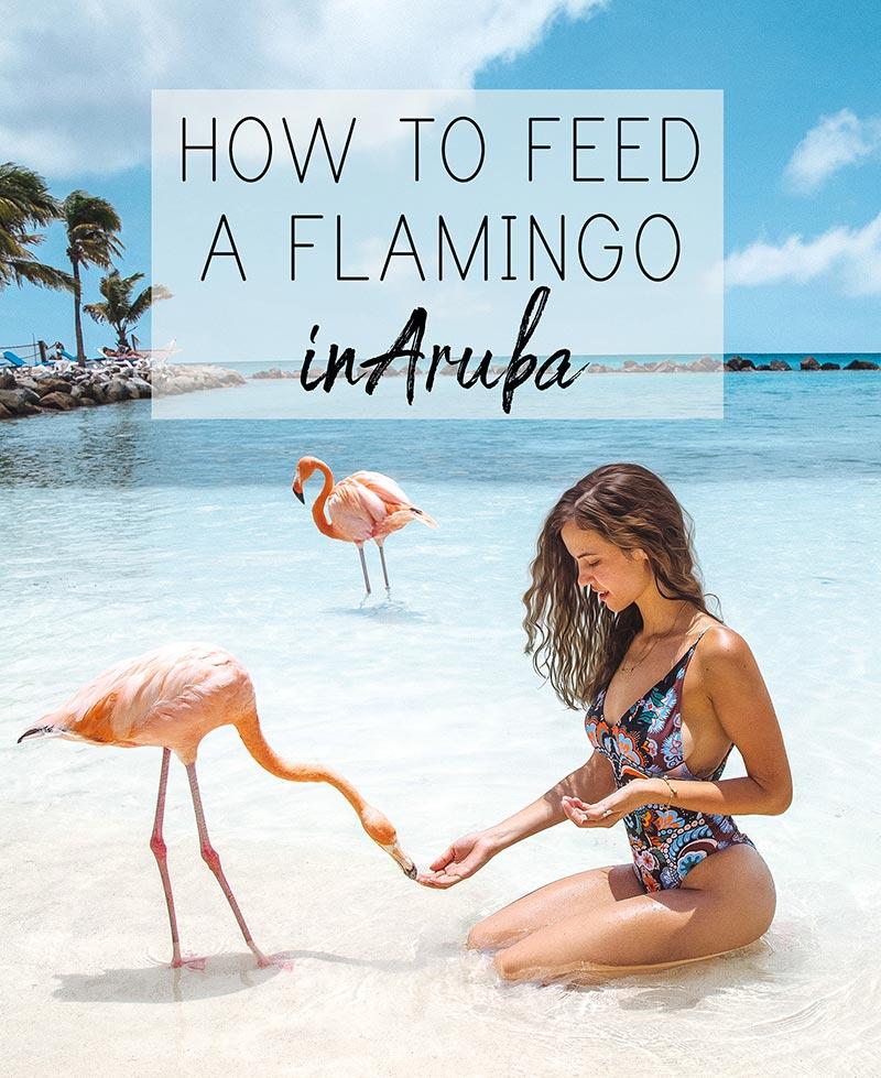 aruba-feeding-flamingos-2