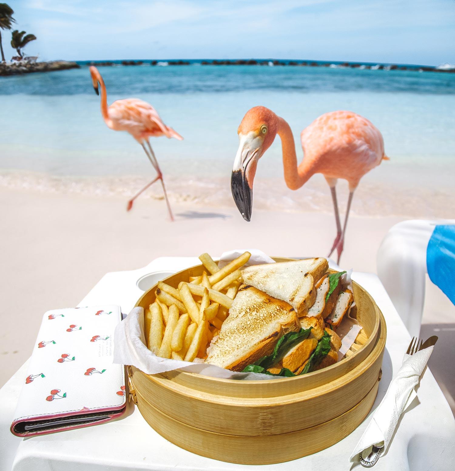 aruba-pink-flamingo-beach