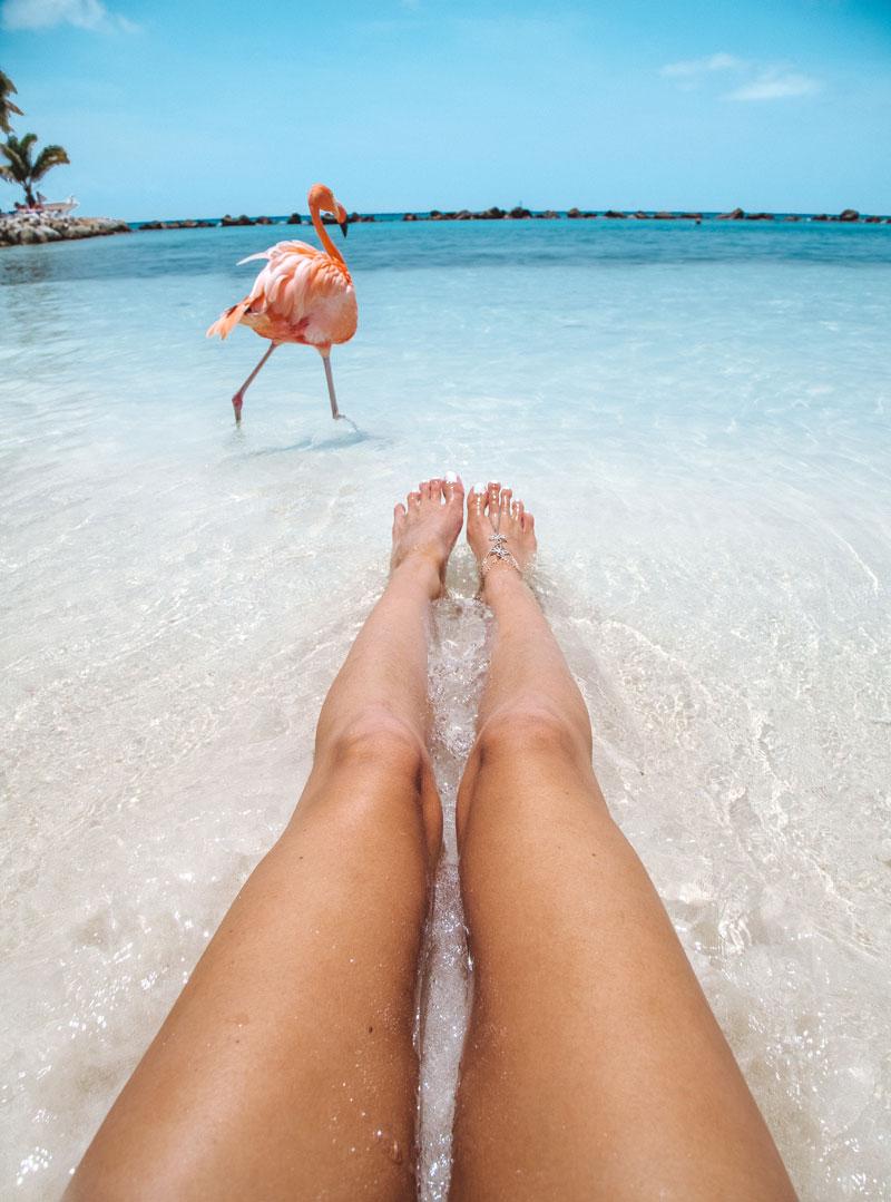 pink-flamingos-on-a-beach-aruba