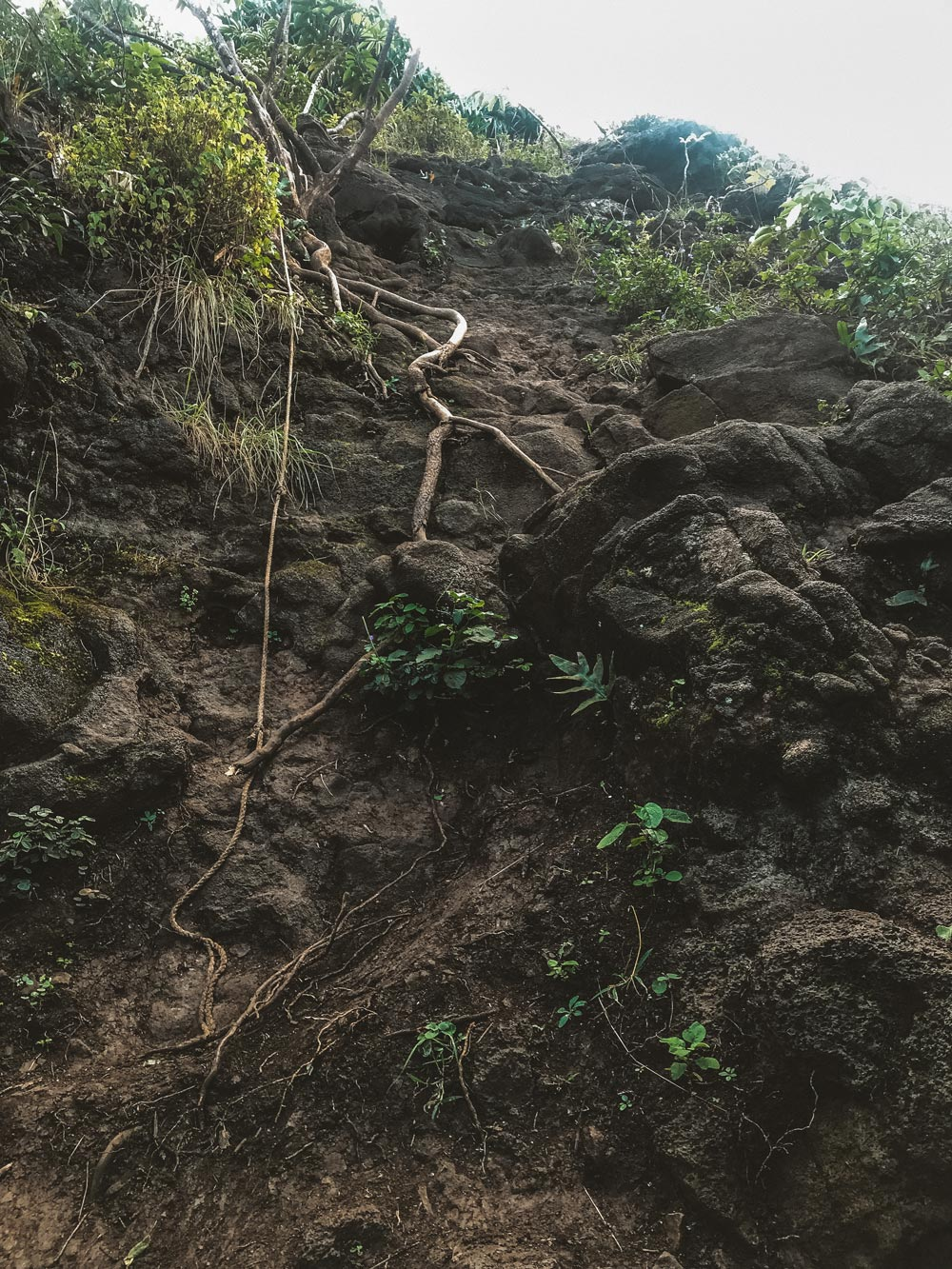 crouching-lion-hike-ropes-incline