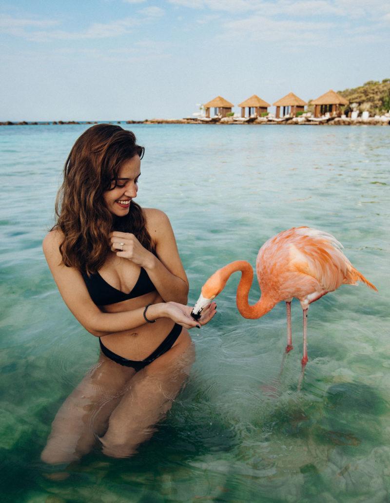 feeding-flamingos-pink
