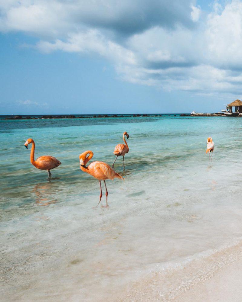 flamingos-beach-aruba
