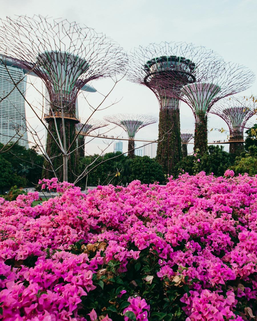 gardens-by-the-bay-singapore-flowers