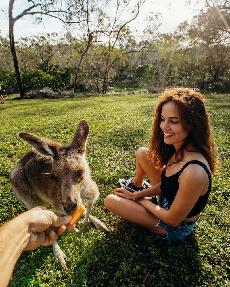 kangaroo-sanctuary-campervan-park-queensland