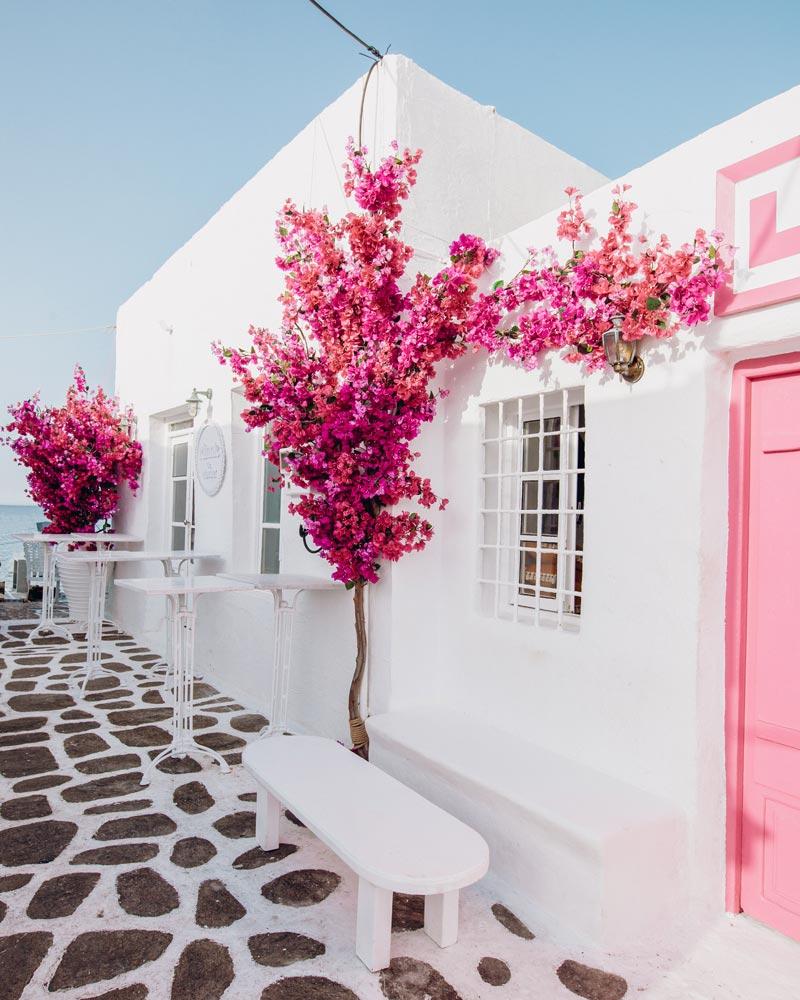 paros-linardo-pink-flowers