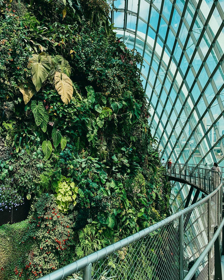 cloud-forest-singapore-itinerary