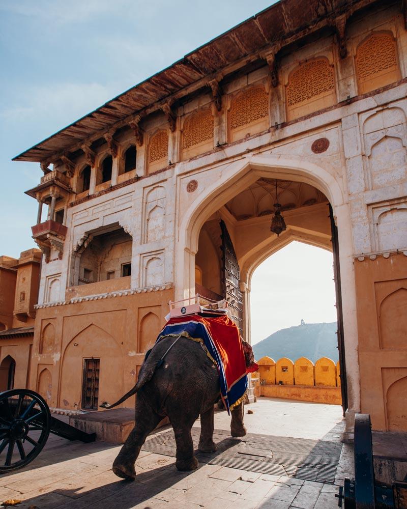 jaipur-amer-fort-gate-elephant