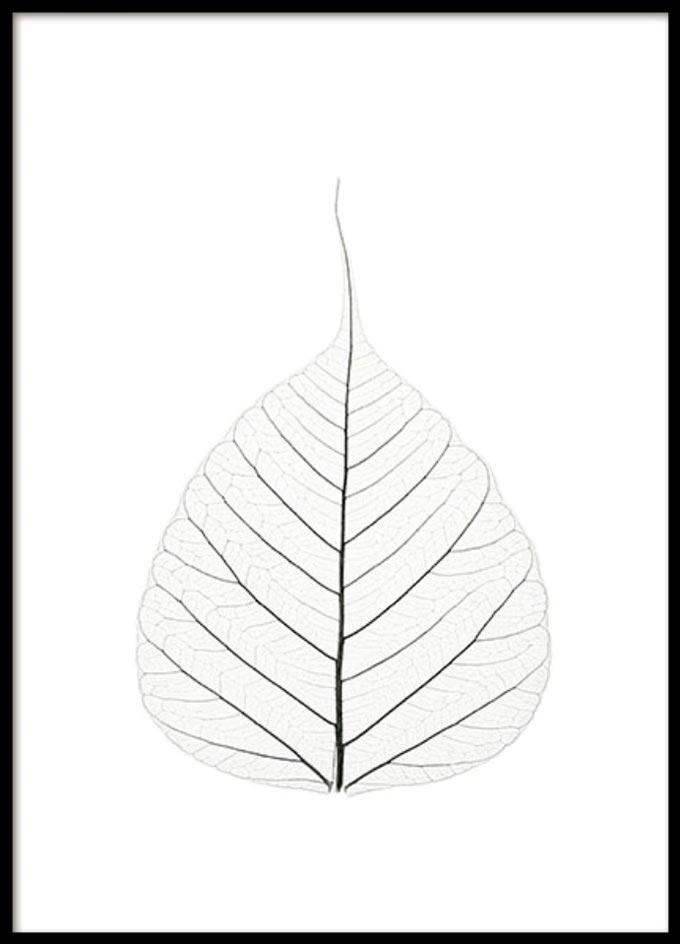white-leaf-wall-print-desenio